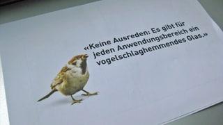 Vogelschutz – nur nicht am eigenen Bau in St. Gallen