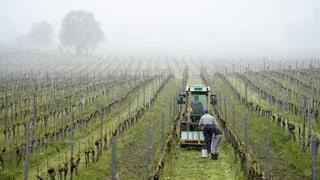 Quitads per las vignas – l'enviern fa suar ils viticulturs