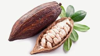 Drei Firmen dominieren den weltweiten Kakao-Markt