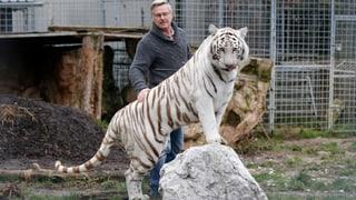Stricklers Tiger und Löwen sind bis zum 30. Juni gezügelt