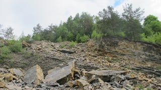 Zementindustrie präsentiert sich als naturfreundlich