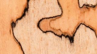 Pilze zaubern Linien ins Holz