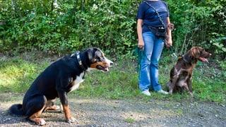 Kaum Widerstand für das neue St. Galler Hundegesetz