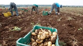 Fair produzierte Lebensmittel – was sind sie uns wert?