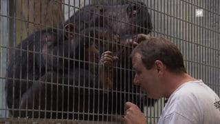 Menschenaffen: Auf Besuch im Zoo