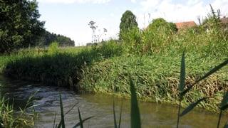 Brücken bauen entlang des Urtenenbachs