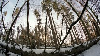 Suenter «Burglind» – Dieschmillis da plantas a terra
