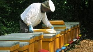 Berner Kantonsparlament will Schutzzonen für Bienen