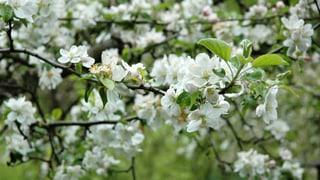 Die besten Glossen: Wetter und andere Naturphänomene