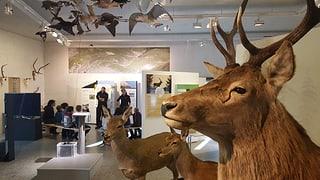 Uffants da la regiun visitian il Parc Naziunal Svizzer