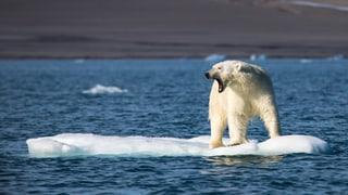 Macht Ihnen dieses Bild Angst vorm Klimawandel?