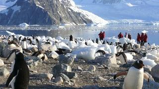 Das Geschäft mit der Natur bedroht das ewige Eis
