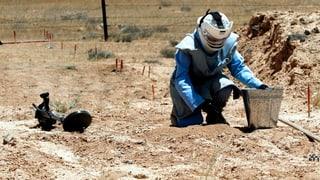 Landminen fordern tausende Tote – auch zu Friedenszeiten
