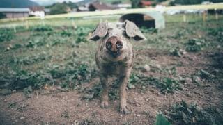 Openair Lumnezia: Wie viel Bauer steckt wirklich in dir?