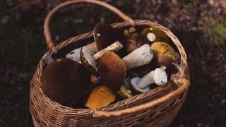 Testet euer Pilz-Wissen im Quiz!