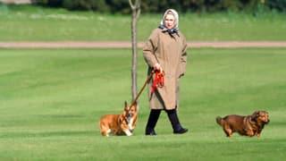 Queen in Sorge: Was passiert mit ihren Hunden nach ihrem Tod?