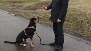 Hundegesetz und Wassergesetz sorgen für Kontroversen
