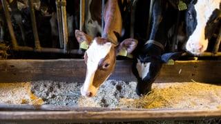 Subventionen: Kleinbauern müssen aufgeben, Grosse profitieren