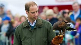 Streichelzoo statt Windeln wechseln: Prinz William ist zurück