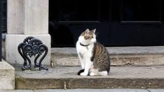 #Brexit: Katzenjammer und Jubel