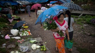 Burmesischer Frühling treibt erst zaghafte Knospen