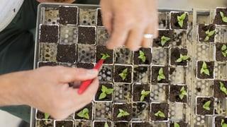 Eine Initiative gegen die Macht der Saatgutmultis