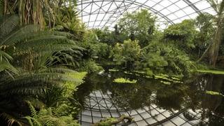Wie man einen Regenwald betreibt