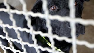Verstösse gegen den Tierschutz: Was tun?  (Artikel enthält Audio)