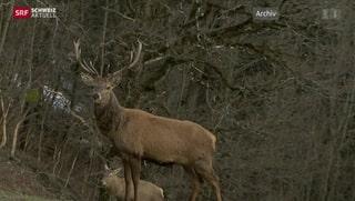 Streit um Hirsche im Oberengadin