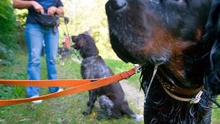 Bündner Hunde sollen wieder in die Schule