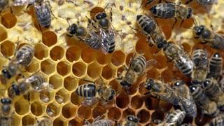 Wohltuendes aus dem Bienenstock