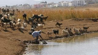 Schweiz verstärkt Hilfe in Konfliktregionen