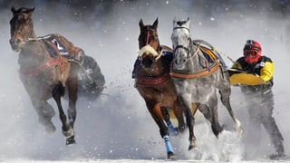 Skikjöring – halsbrecherischer Ritt auf der Rennbahn