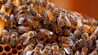 Gute Neuigkeiten aus den Bienenhäuschen