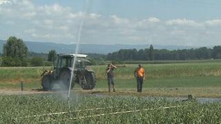 Freiburger Bauern wehren sich gegen Wasser-Rationierungen