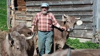 Den Kühen die Hörner und die Würde zurückgeben