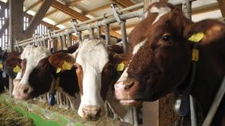 Die Kühe vom Talacherhof Lengnau stehen unter Strom