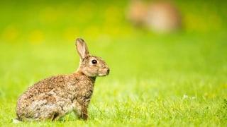 Ein Kaninchen-Video sorgt für Aufsehen