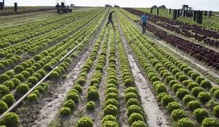 Böden von Bio-Bauern mit Pestiziden belastet