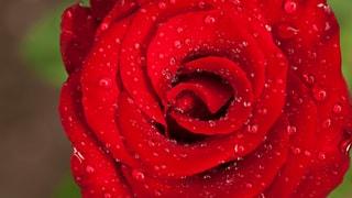 Romantik – «Hör auf dein Herz»