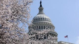 Wie Kirschbäume in Washington einst einen Skandal auslösten