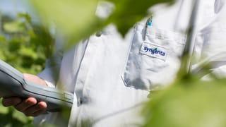 Syngenta darf Genmais nach China exportieren