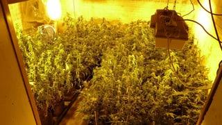 Polizei findet drei Hanf-Plantagen und kiloweise Drogen