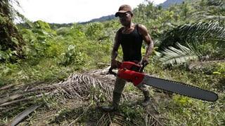 Statt Palmöl ausklammern Nachhaltigkeit einfordern
