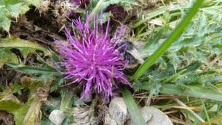 Giftig, dornig, stachelig – Pflanzen im Überlebenskampf