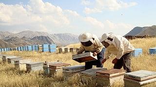 «Der Imker» oder Herr Gezer und seine Bienen