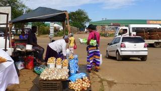 Gentech – die Hoffnung für Afrika?