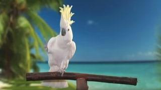 Ein tanzender Vogel beflügelt die Wissenschaft