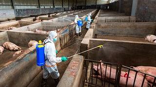 Virus treibt Fleischpreise in die Höhe