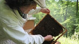 Aargauer und Solothurner Forschung gegen das Bienensterben